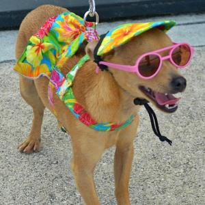 Events for Pets on the Treasure Coast